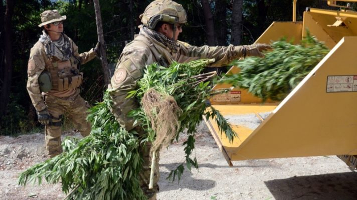 california seizes 30 million in black market cannabis from illegal pot shops 681905 The Weed Blog - Cannabis News, Culture, Reviews & More