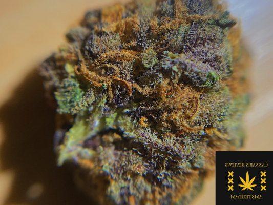 f8d8914d b2ef 497e b41b a046f348d376 e1593011712640 The Weed Blog - Cannabis News, Culture, Reviews & More