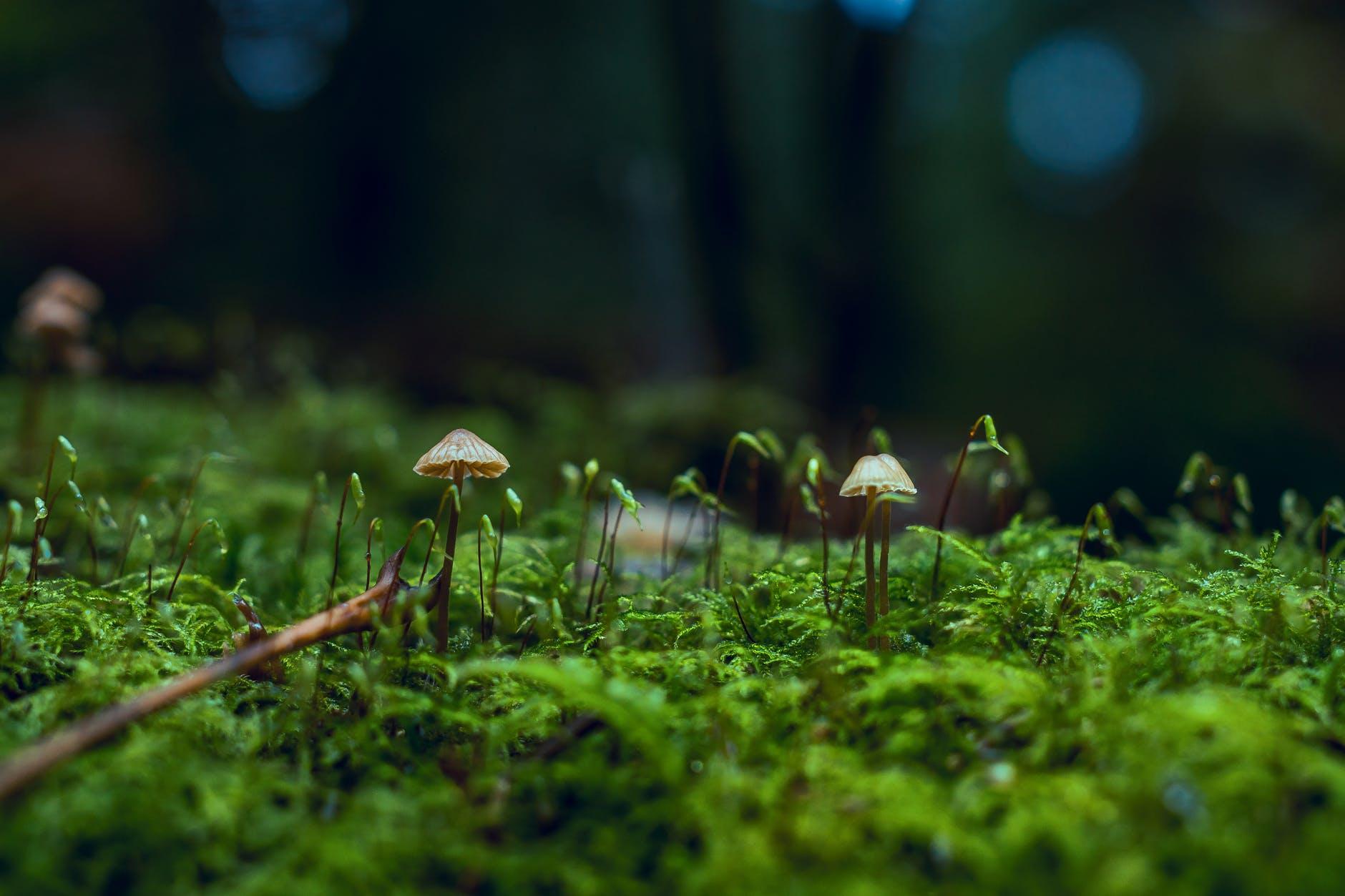 Psychedelic-MagicMushrooms-TheWeedBlog