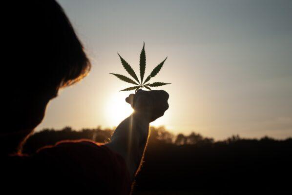 CBN-Cannabis-TheWeedBlog